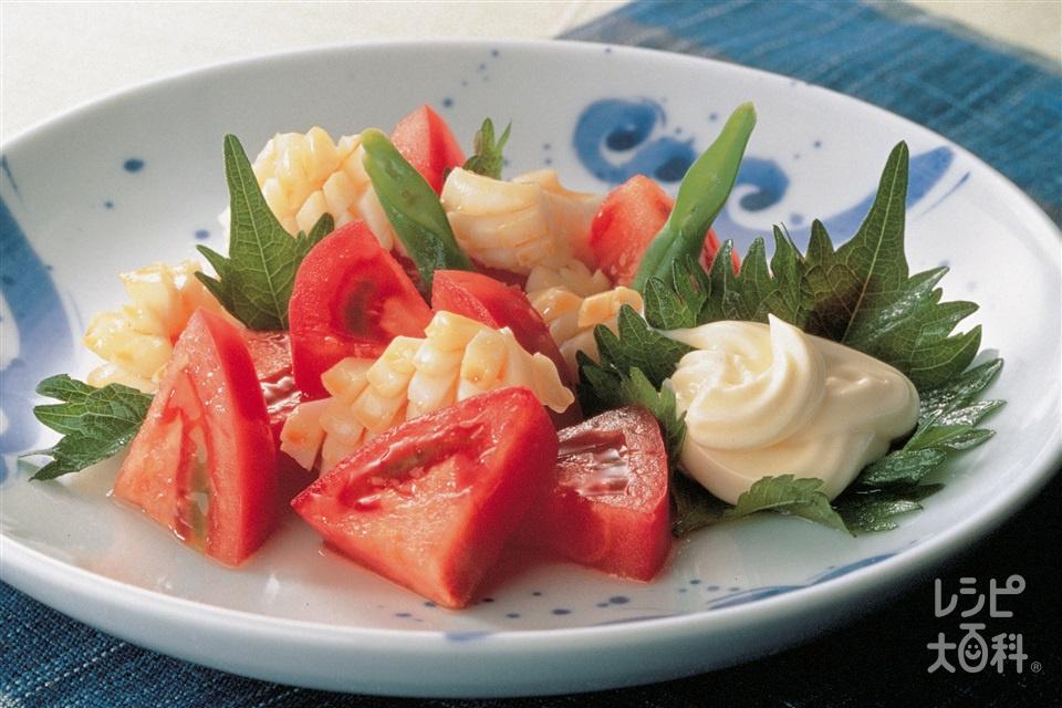 トマトといか・青じその和風マヨネーズサラダ(トマト+いか(胴)を使ったレシピ)