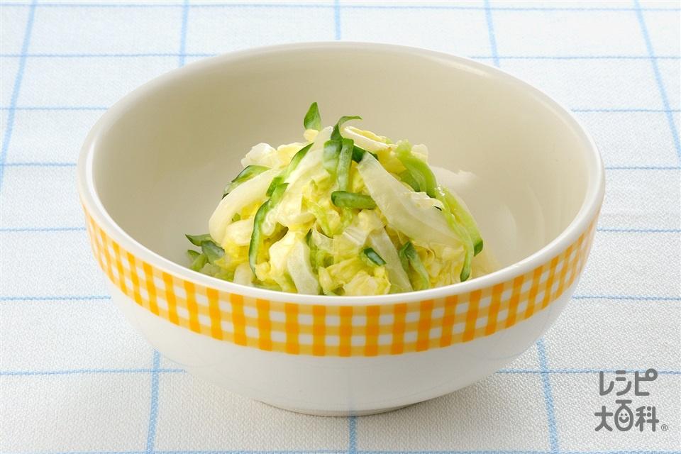 白菜コールスロー(白菜+きゅうりを使ったレシピ)