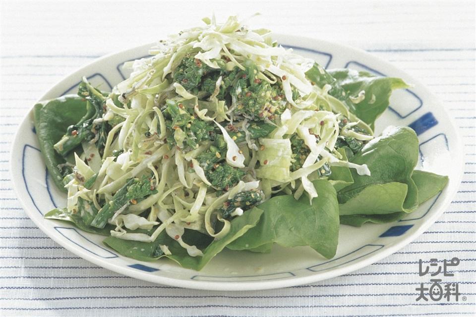 じゃこのサラダ(キャベツ+菜の花を使ったレシピ)
