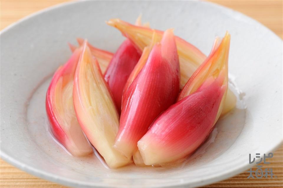 みょうがの梅酢漬け(みょうが+砂糖を使ったレシピ)