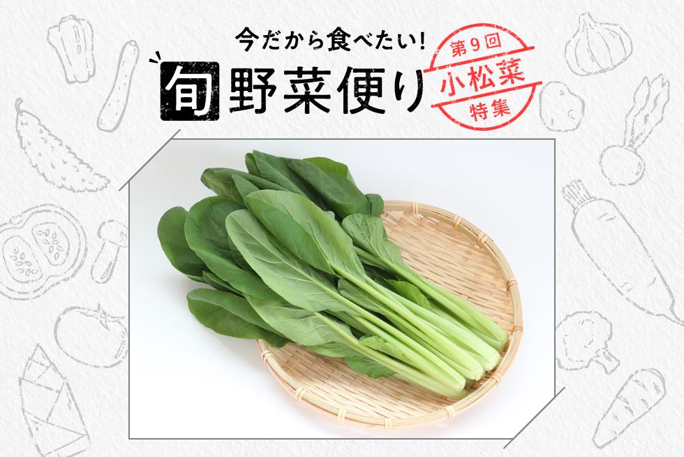 旬野菜便り♪冬に甘みUP!旬の小松菜をおいしく食べよう☆