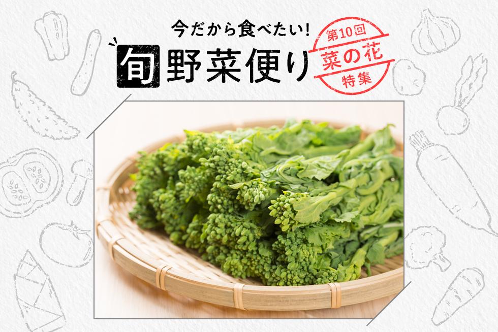 旬野菜便り♪春野菜の代表!菜の花の魅力をご紹介☆