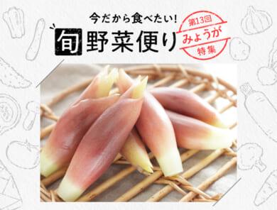 旬野菜便り♪夏こそ香味野菜を!みょうが使いこなし術!