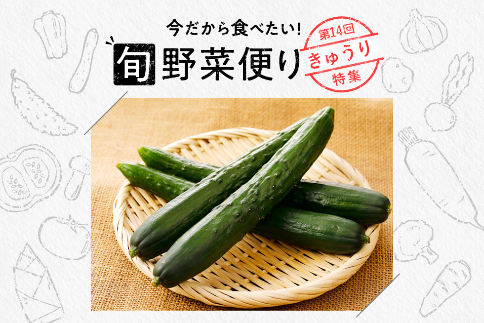旬野菜便り♪きゅうりの可能性を再発見◎切り方別活用術